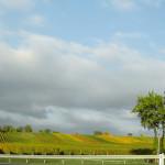 Weinberge Weiden
