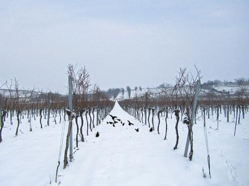 raben im schnee